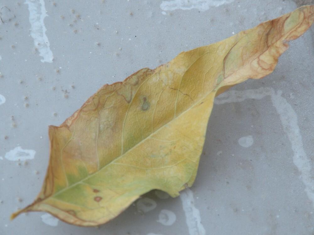 Leaf wonder! by Bonnie Pelton