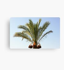 tree palm Canvas Print