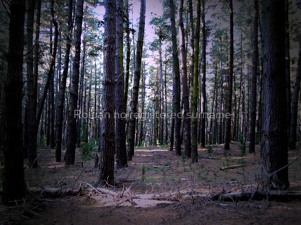 Gloomy Pine Forest by Rowan no registered surname