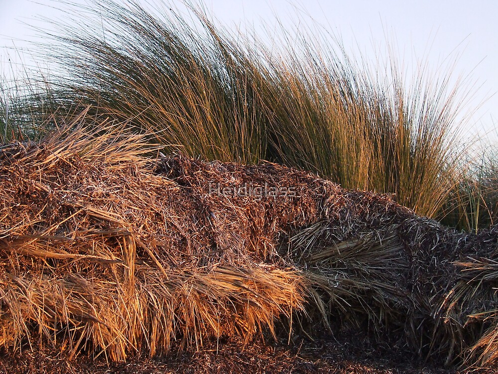 Native grasses and seaweed by Heidiglass