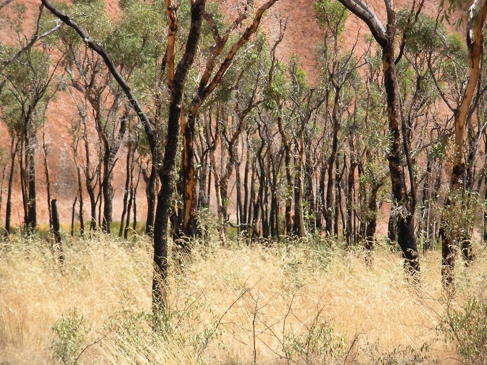 Uluru detail by robw