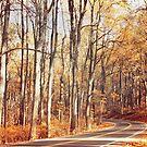 Autumn Drive by Paula Bielnicka