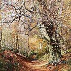 November Walk by John Thurgood