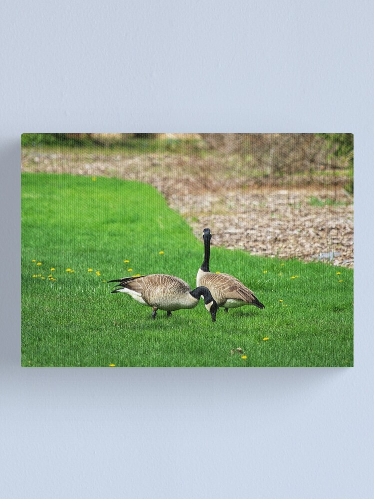 Alternate view of Canada Geese Canvas Print
