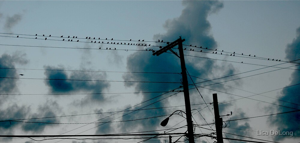 Birds on a wire by Lisa DeLong