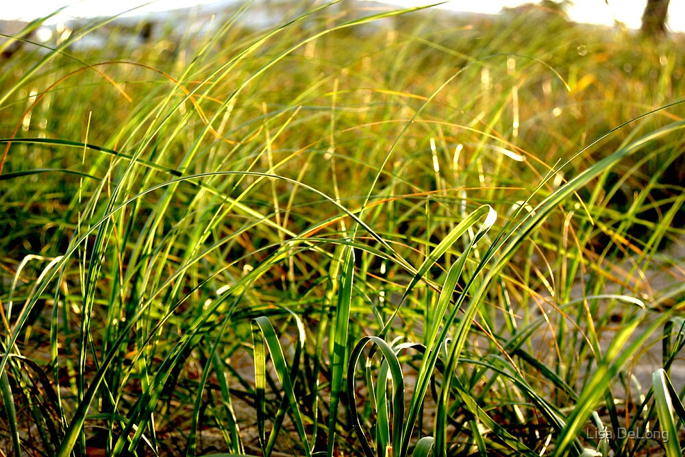 Sea grass by Lisa DeLong