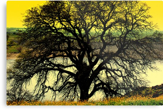 The Ole Oak Tree by davesdigis