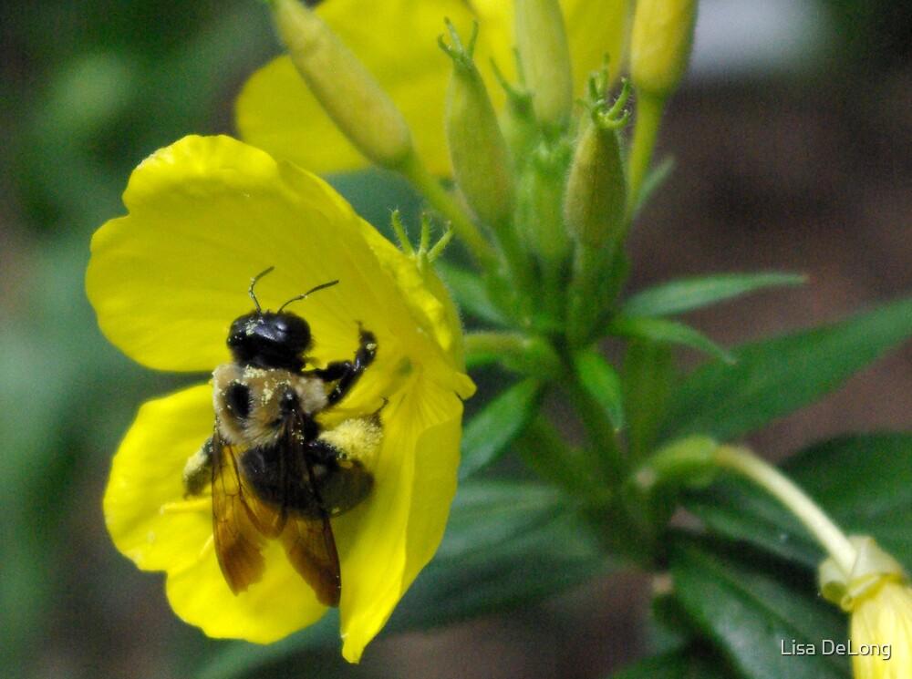 Bee by Lisa DeLong