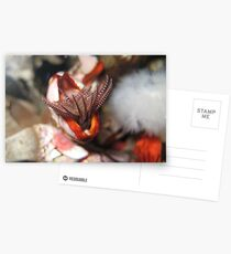 An enemy anemones Postcards