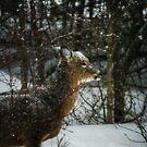 Christmas visitor by debfaraday