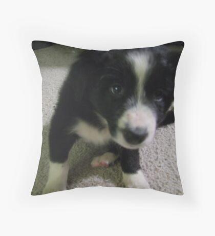 Introducing Bella Throw Pillow