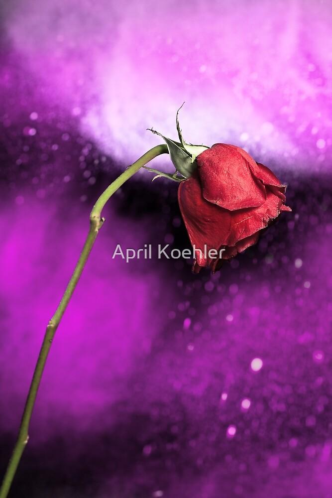 Enchanted Rose by April Koehler
