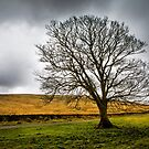 Single tree in stormy weather by Dave Hare
