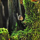 Small 'Shroom on a Mossy Tree Stump by Billlee