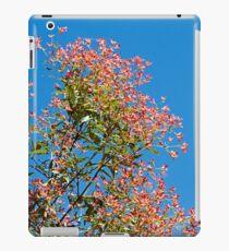 Ceratopetalum gummiferum (New South Wales Christmas Bush) iPad Case/Skin