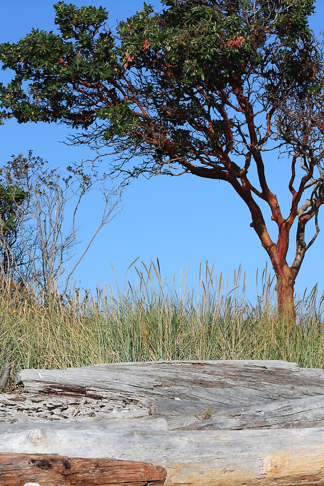 Tree at the beach by MurrayB