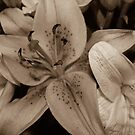Flowers in Sepia by WeeZie