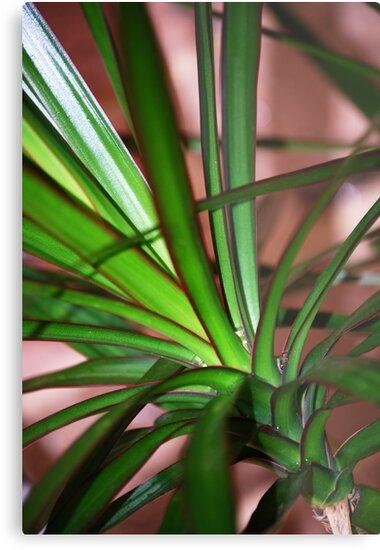 Plant by Bek  Williams