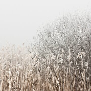 Grass and Branches by AprilKoehler
