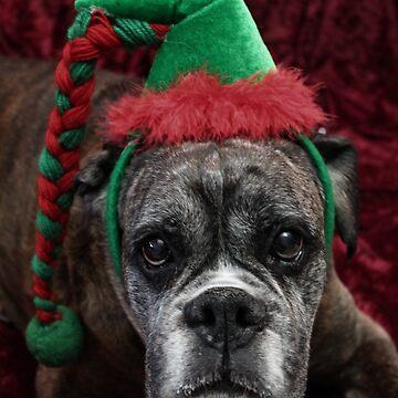 Merry Christmas ~ Boxer Dog Series  by Evita
