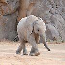 Baby Elephant by Kathleen Brant