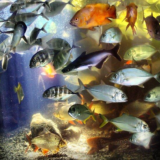 Aquarium by Martin Huang