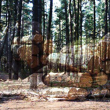 Overlaid pine plantation by donkeynomad