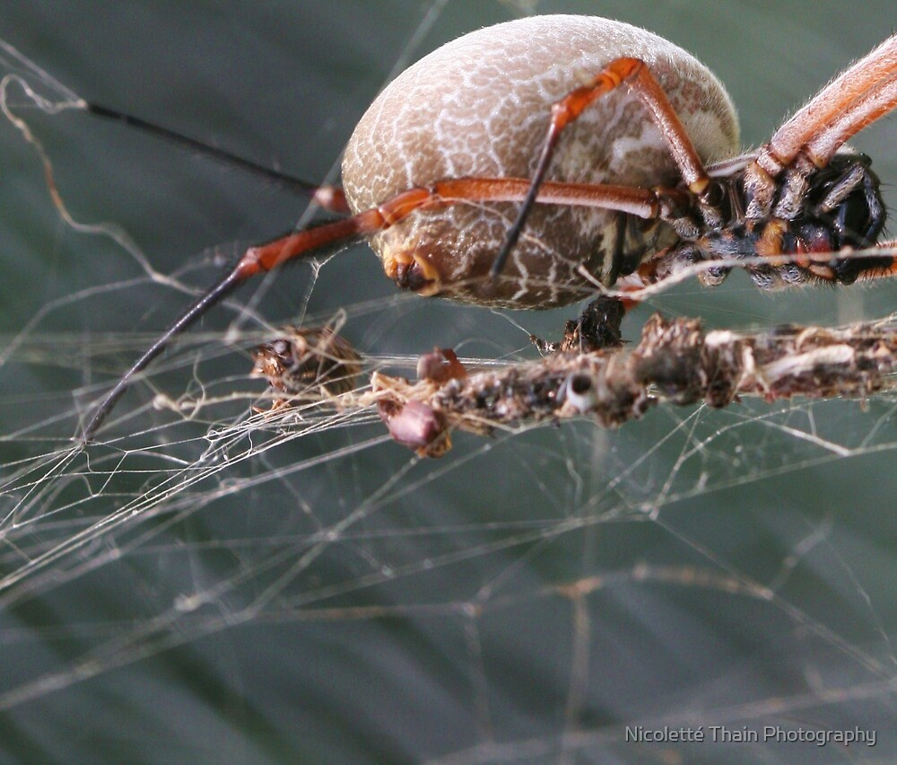web weaver by Nicoletté Thain Photography