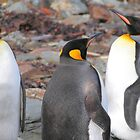 King Penguins by Carole-Anne