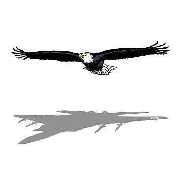 Flying Eagle by NewSignCreation