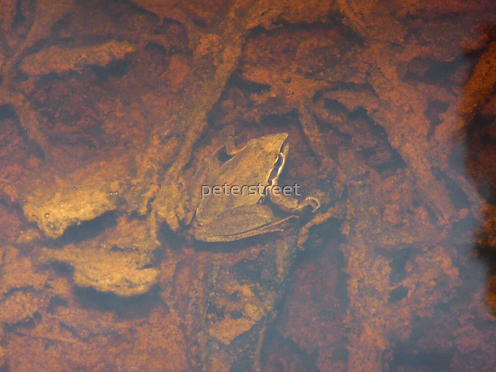 Frog Submerged by peterstreet