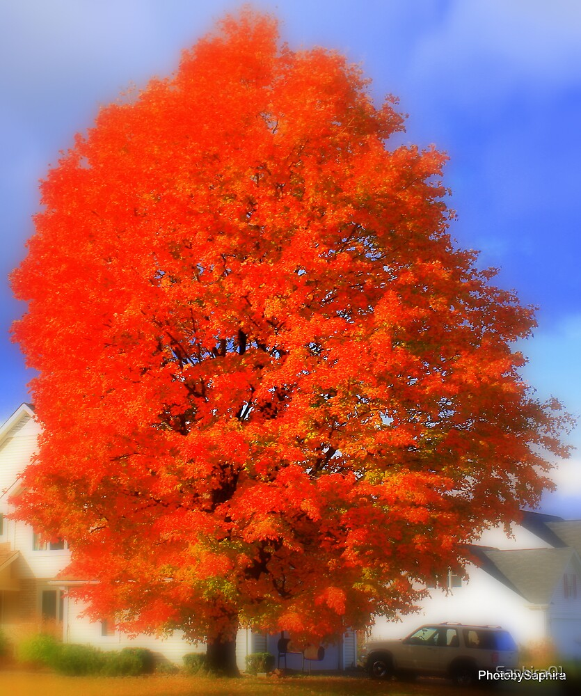 Burst of Autumn by Saphira01