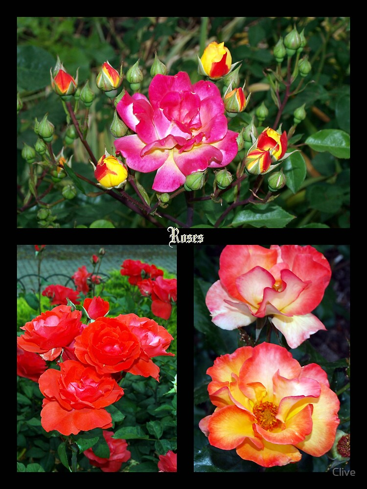 Collage of Roses by Clive