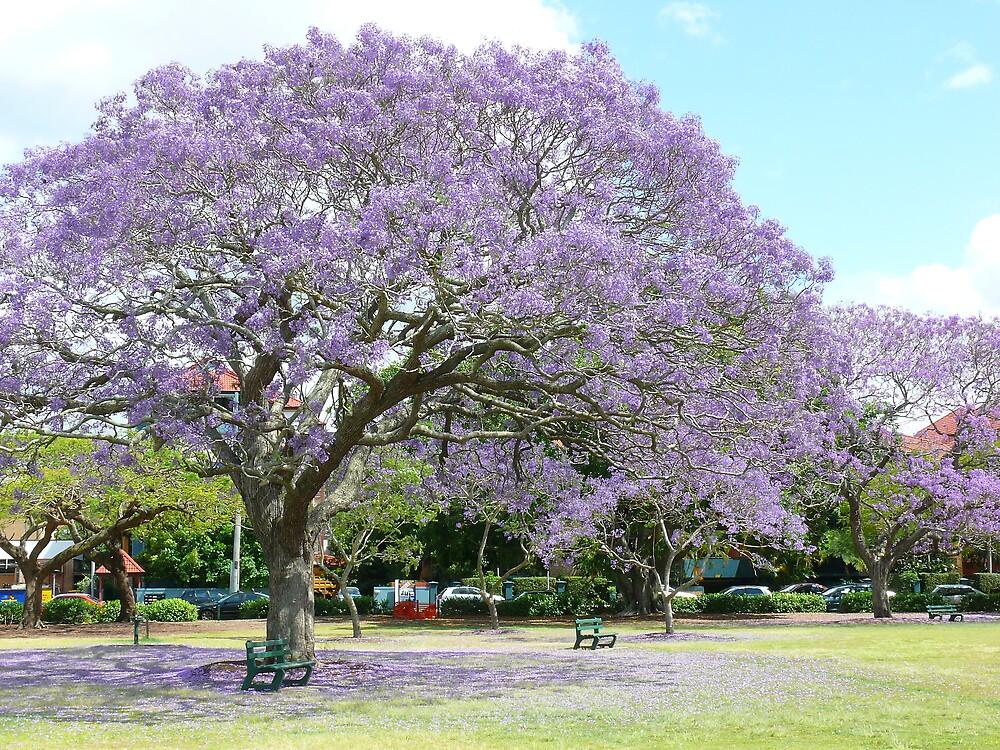 Jacaranda Beauty by Keith G. Hawley