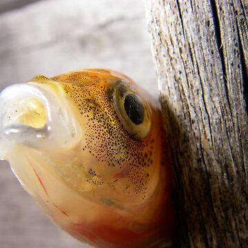 fish by sergiocolour