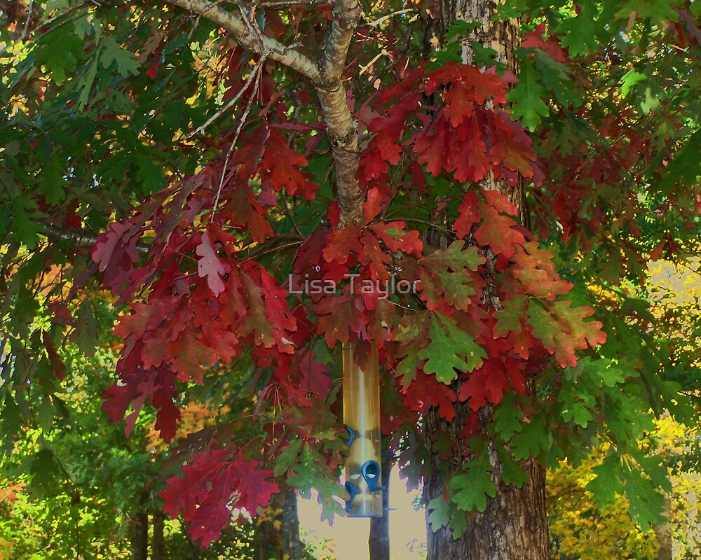 Red Canopy for the Birds by Lisa Taylor