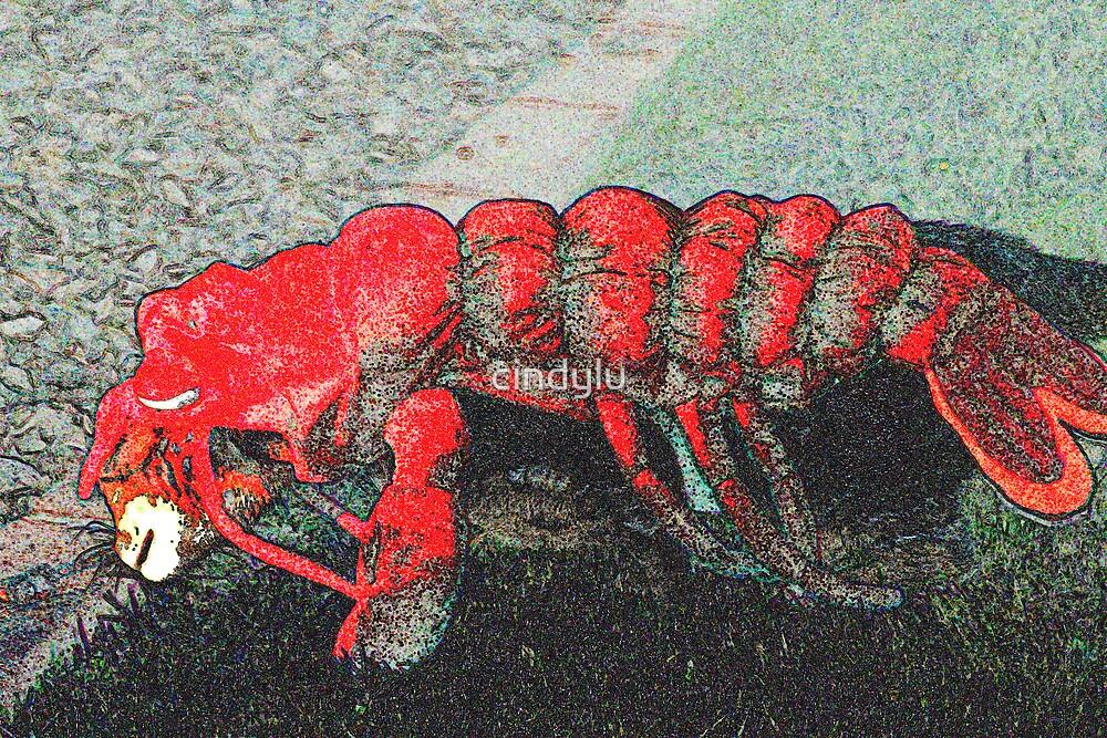 Lobster cat by cindylu