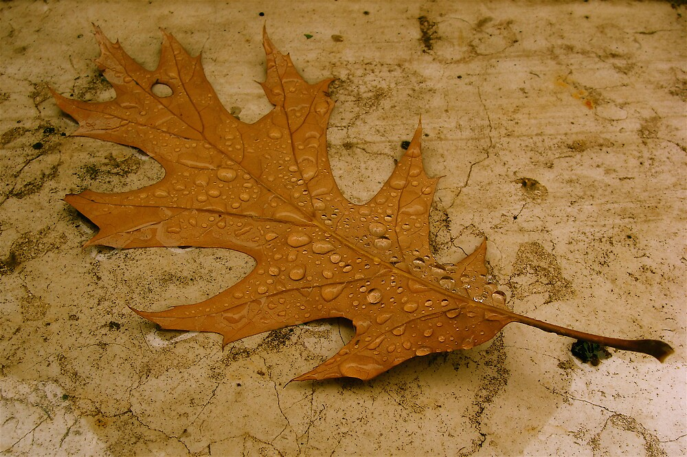 leaf and drops  by anisja