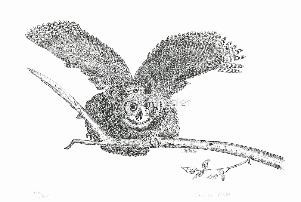 Great Horned Owl: Warning - Pen & Ink by Gordon Pegler