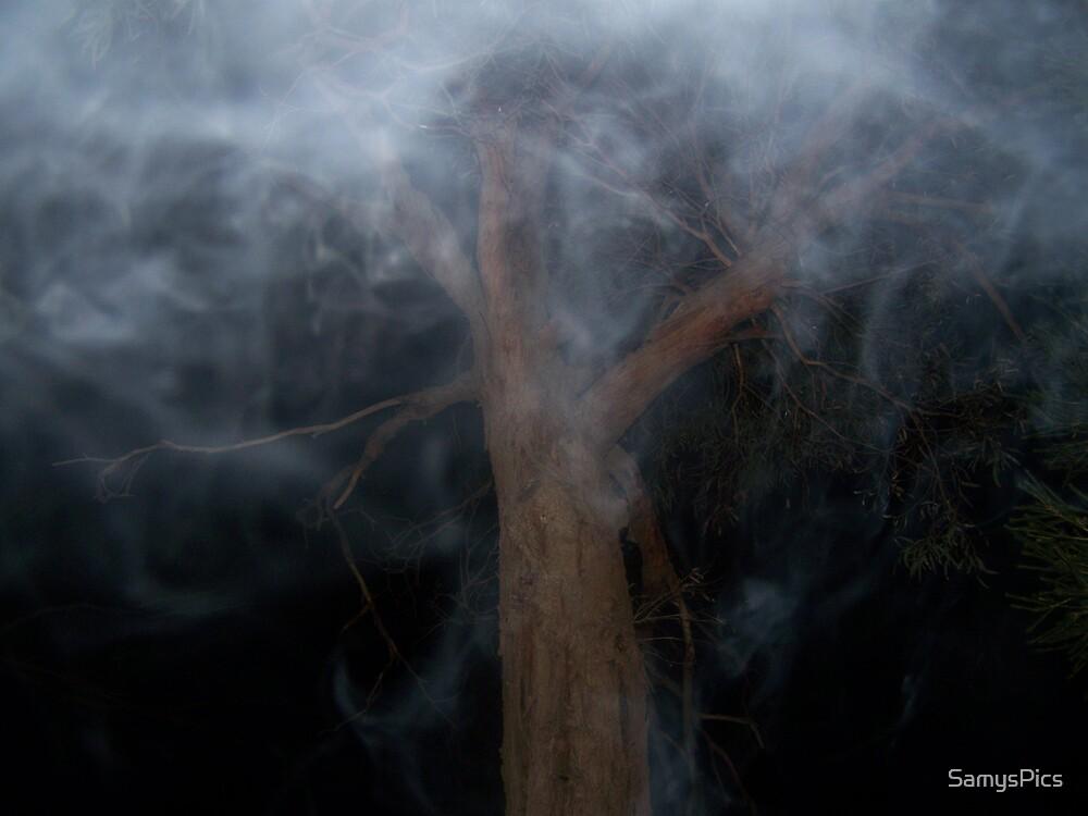 Smokey by SamysPics