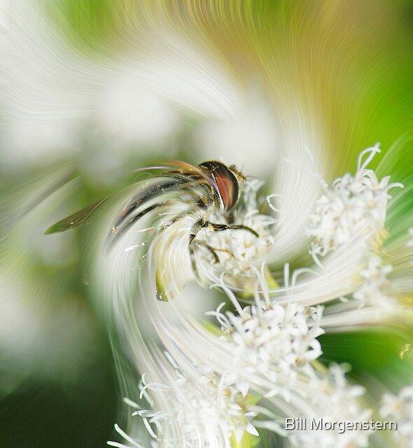 Magical Flight by Bill Morgenstern