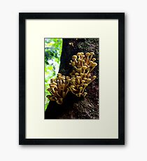 Growth Framed Print