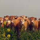 Here Come the Cows! by Pamela Jayne Smith