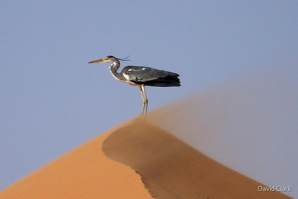Sandstorm Heron by David Clark