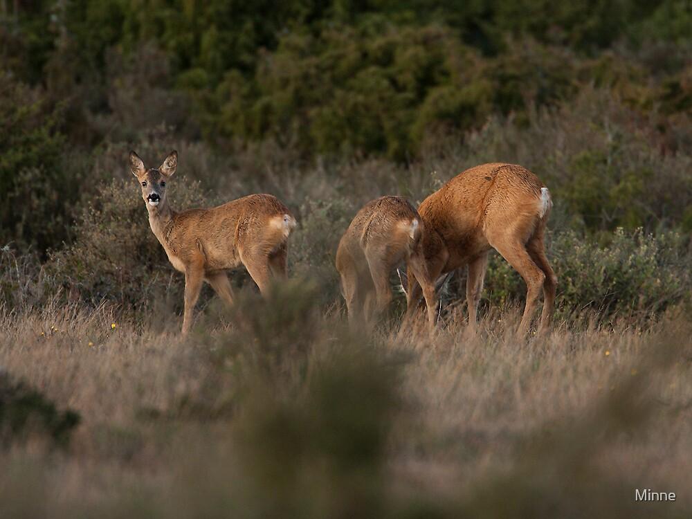 Deer by Minne