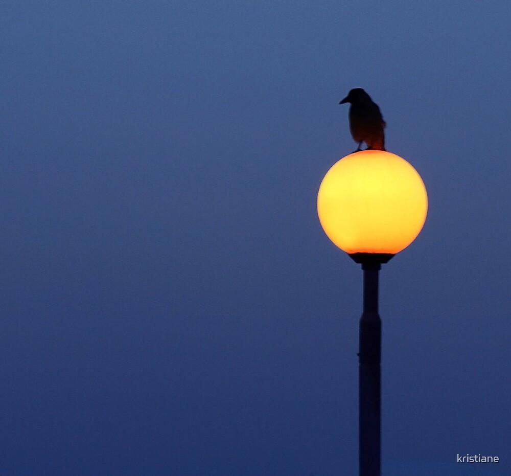 Crow by kristiane