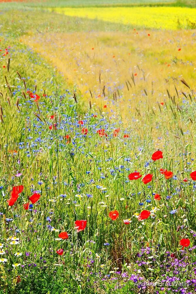Alpine Meadow by Andrew Bret Wallis