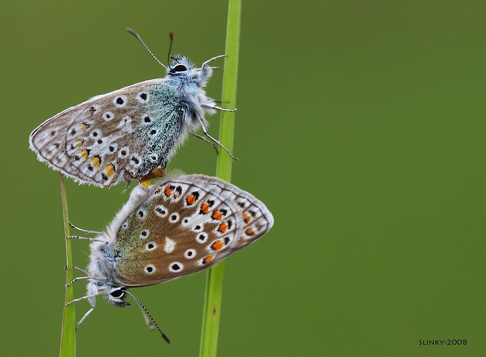 Butterflies by Slinky2012