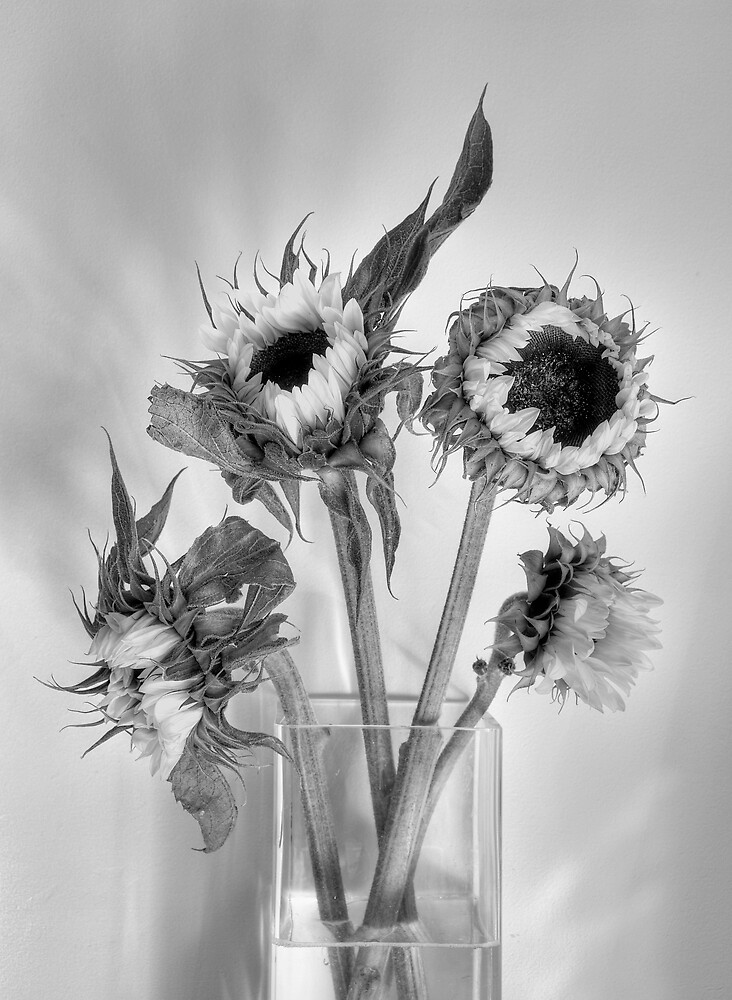 Sunflowers by algo
