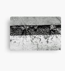 up through the cracks #2 Canvas Print